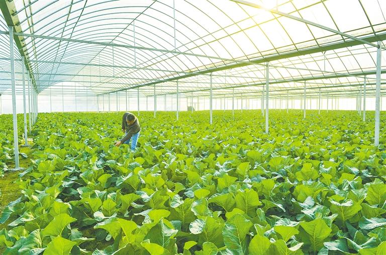 -->  五年来,长河镇把现代农业作为发展基础,产业优势逐步凸显。   完成国家级农业综合开发项目和创汇蔬菜主导产业示范区建设,累计投入资金3483万元,改造面积18000余亩,为加快农业产业结构调整,发展优质高效农业打下扎实基础。   完成三八江除险加固工程建设,切实保障两岸群众生产生活安全。   加快推进农业节水型灌溉工程建设,完成推广面积5000亩。   依托农合联平台,成立全市首个农事服务中心,为农户提供农资供应、农技指导和贷款担保等涉农服务,向25家农业企业、农场和种养植大户提供贷款担保服务