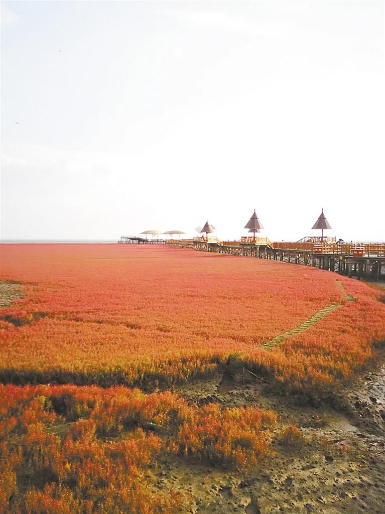 -->  红色的海洋,碱蓬草创造的奇迹,推荐九月份过来,红变紫,色彩更加艳丽。红海滩风景廊道区坐落于辽宁省盘锦市大洼县赵圈河镇境内,总面积20余万亩。这里以红海滩为特色,以湿地资源为依托,以芦苇荡为背景,再加上碧波浩渺的苇海,数以万计的水鸟和一望无际的浅海滩涂,还有许多火红的碱蓬草,成为一处自然环境与人文景观完美结合的纯绿色生态旅游系统,被喻为拥有红色春天的自然景观。-->