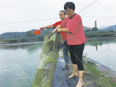 忙碌中的徐珍萍夫妇.            ■摄影 全媒体记者 李佳珊